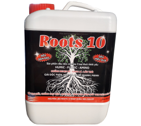 ROOTS 10